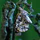 Butterfly Relaxing on a Branch - VideoHive Item for Sale