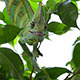 Chameleon Hunting - VideoHive Item for Sale