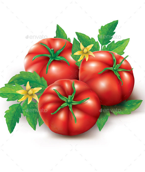 Tomatoes Leaves and Flowers - Food Objects