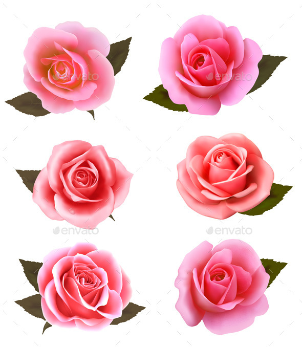 Set of Pink Roses - Flowers & Plants Nature