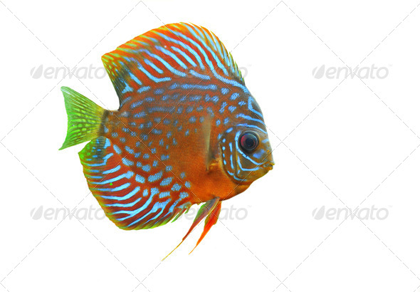 discus - Stock Photo - Images