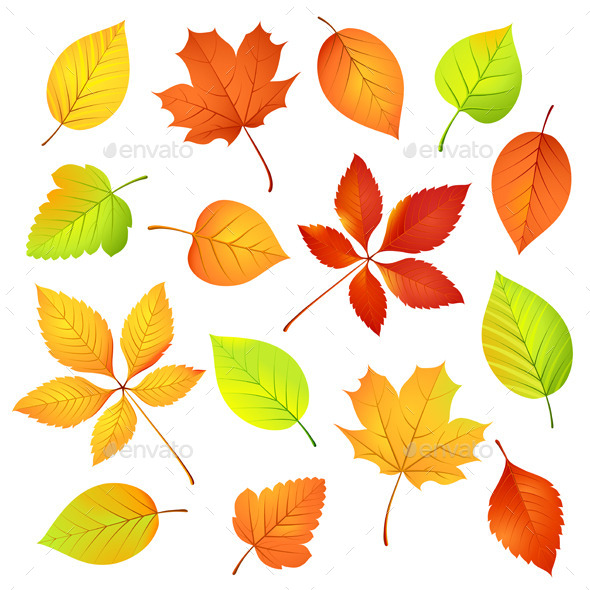 Autumn Leaves. Vector illustration - Seasons Nature