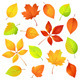 Autumn Leaves. Vector illustration - GraphicRiver Item for Sale