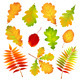 Autumn Leaves - GraphicRiver Item for Sale