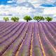 Lavender square - PhotoDune Item for Sale