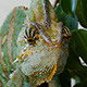 Head Of The Chameleon - VideoHive Item for Sale