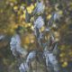 Autumn Fluffy Seeds on Plants - VideoHive Item for Sale