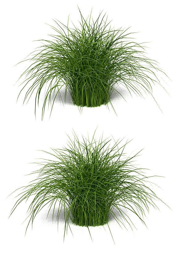 "Variegated Grass ""Morning Light"" - 3DOcean Item for Sale"