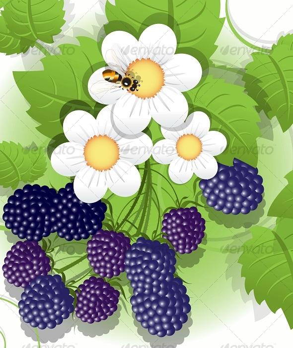 Blackberry - Organic Objects Objects