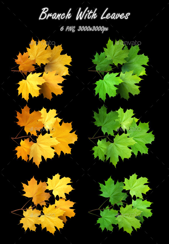 Branch With Leaves (Maple) - 3D Renders Graphics