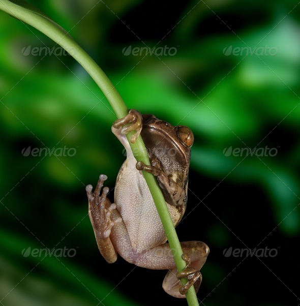 Hang On - Stock Photo - Images