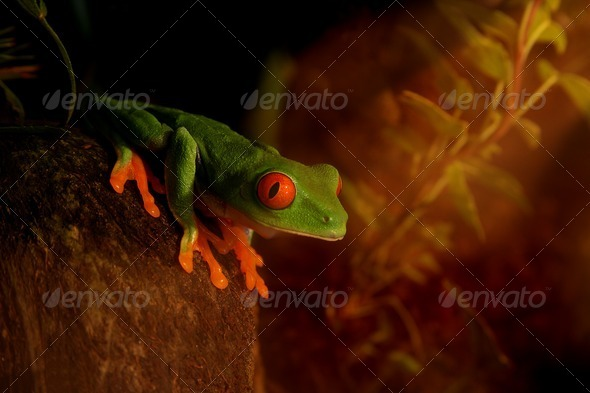 Sunrise Frog - Stock Photo - Images