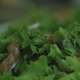 Prepares a Salad 3 - VideoHive Item for Sale