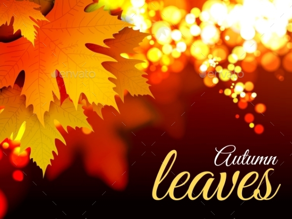 Autumn Leaves - Nature Conceptual