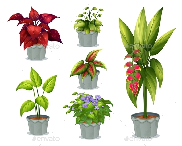 Six Ornamental Plants - Flowers & Plants Nature