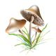 Mushroom - GraphicRiver Item for Sale