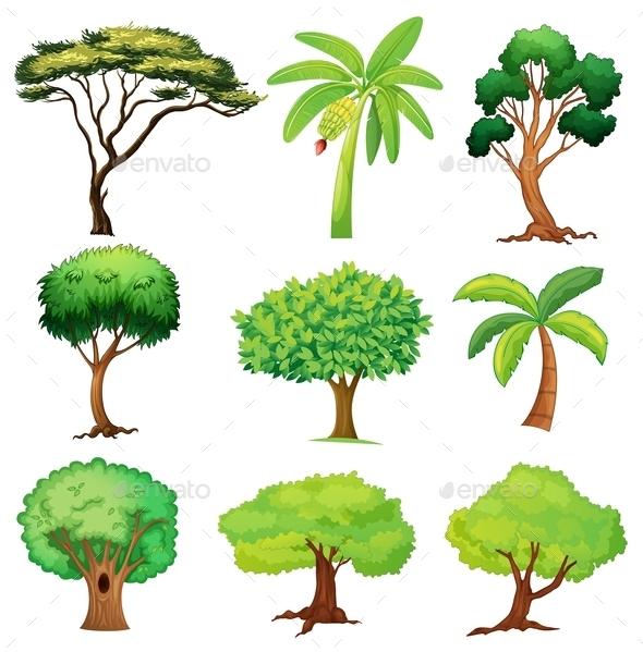 Various Trees - Flowers & Plants Nature