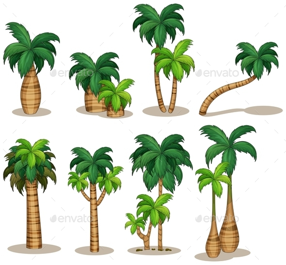 Palm Trees Set - Flowers & Plants Nature