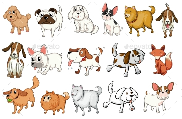 Different Breeds of Dogs - Animals Characters