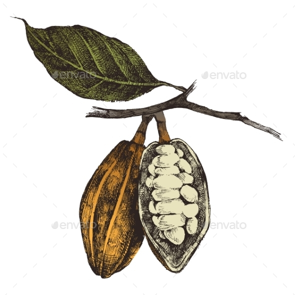 Hand Drawn Cocoa Beans - Nature Conceptual