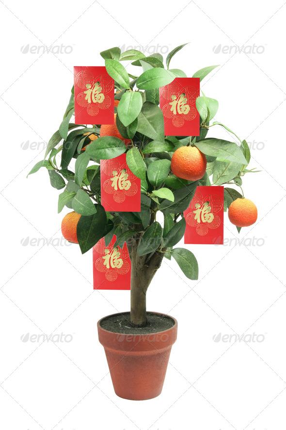 Tangerine Plant - Stock Photo - Images