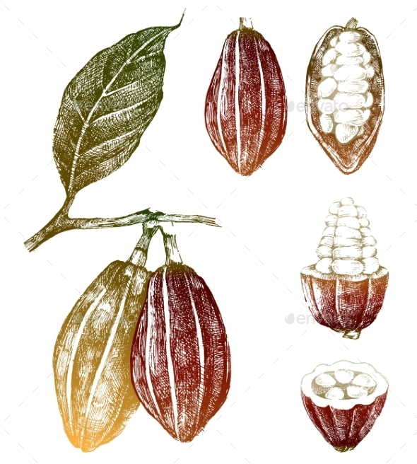 Hand Drawn Cocoa Beans Set - Nature Conceptual