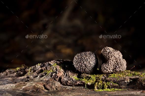 Black truffles - Stock Photo - Images