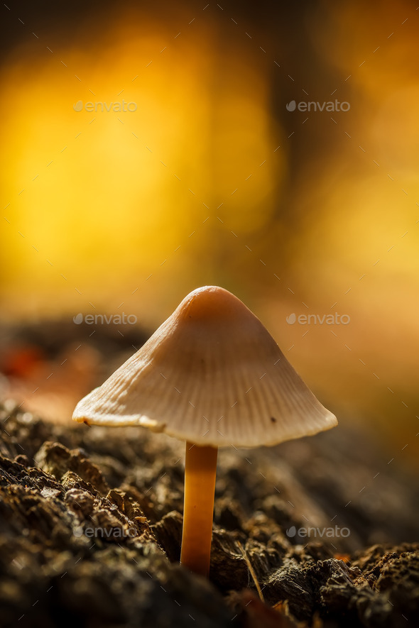Wild mushroom - Stock Photo - Images