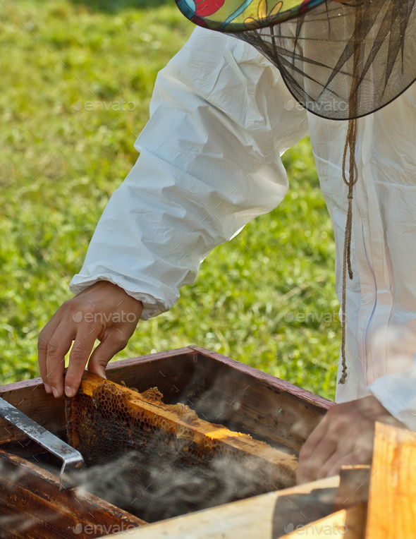 Beekeeper at work - Stock Photo - Images