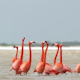 Pink Flamingo Mexico Wildlife Bird - VideoHive Item for Sale