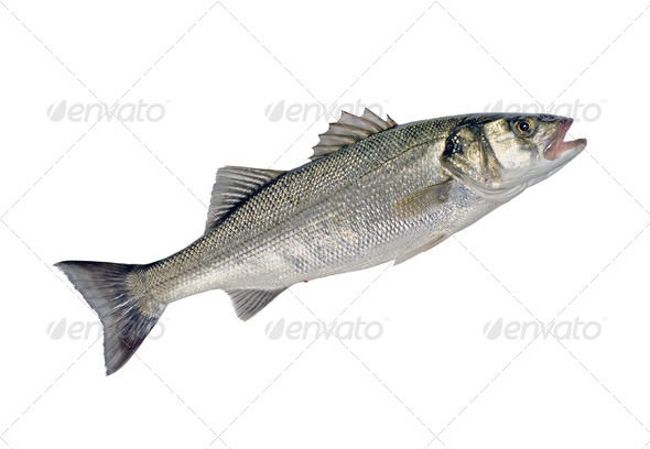 Sea Bass Fish - Stock Photo - Images