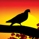Sunset Pigeon - GraphicRiver Item for Sale