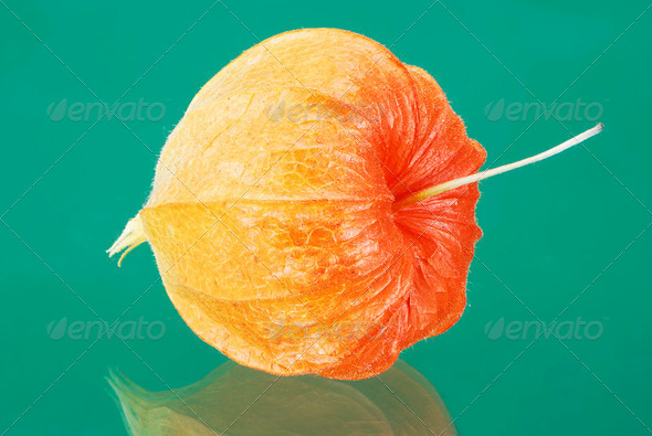 Chinese lantern lily - Stock Photo - Images