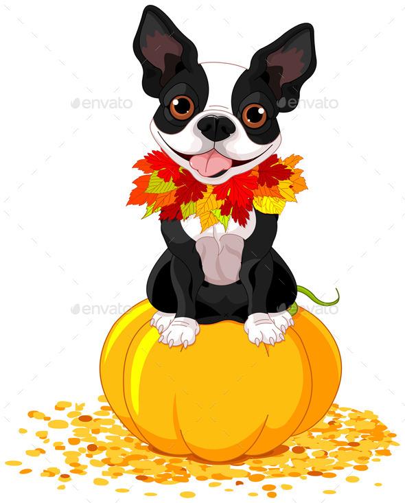Boston Terrier - Halloween Seasons/Holidays