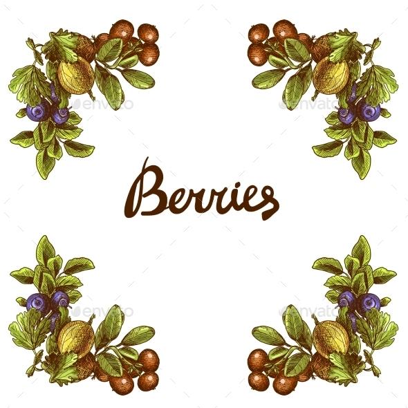 Sketch Berries Frame - Borders Decorative