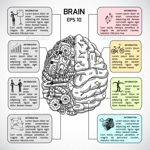 Brain Hemispheres Sketch Infographic - Concepts Business