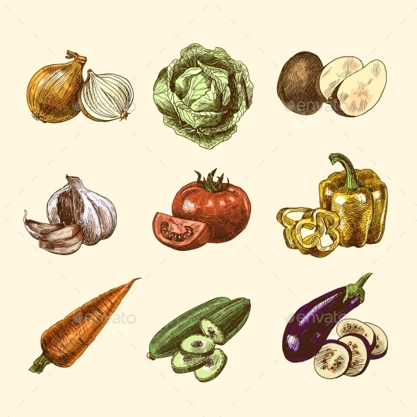 Vegetables Sketch Set in Color - Food Objects