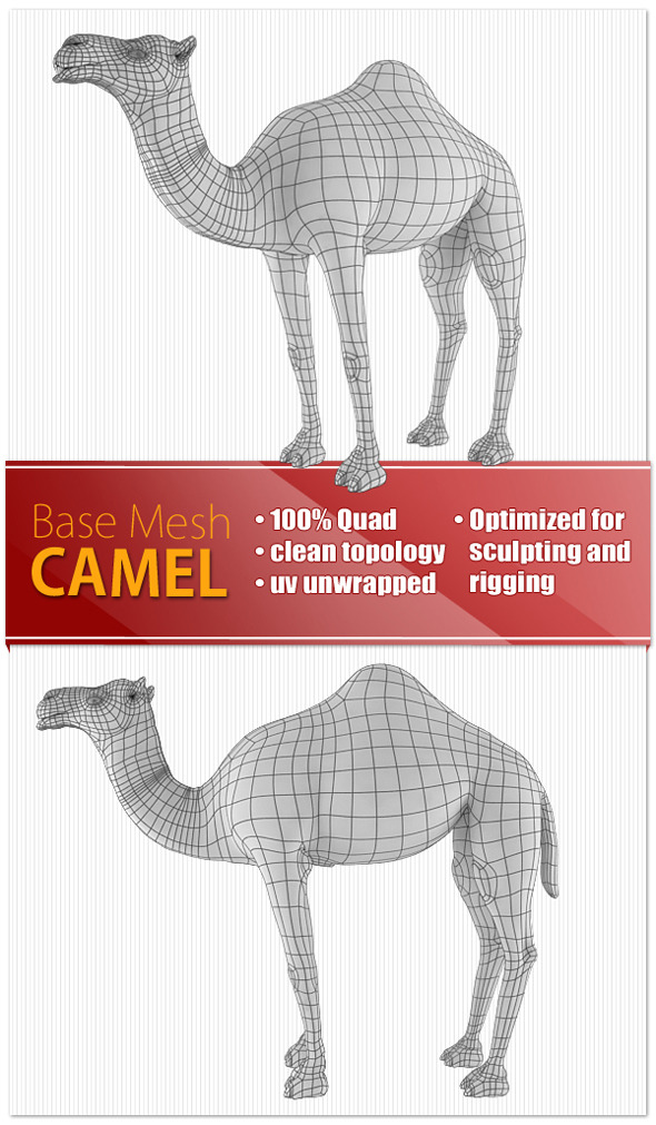 Camel - 3DOcean Item for Sale