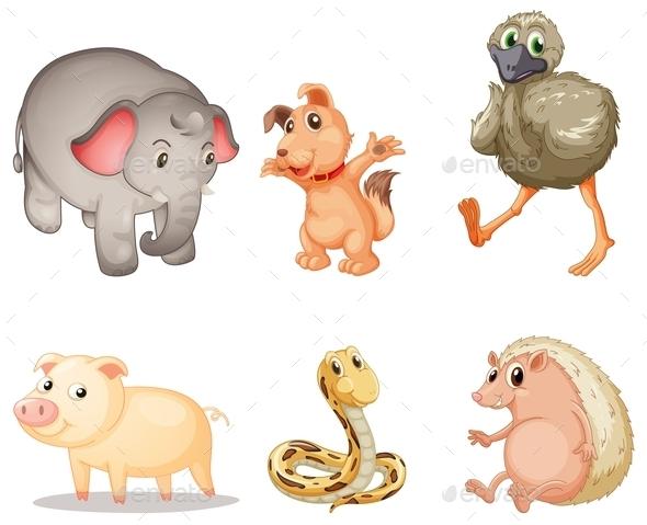 Animal Series - Animals Characters