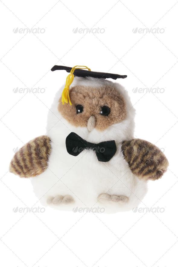 Graduating Owl - Stock Photo - Images