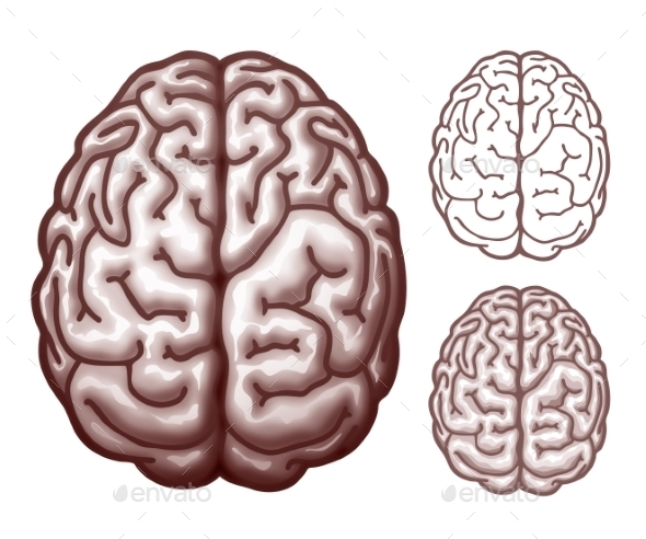 Brain Top View - Health/Medicine Conceptual