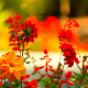 Flowers and Fountain in the Background - VideoHive Item for Sale