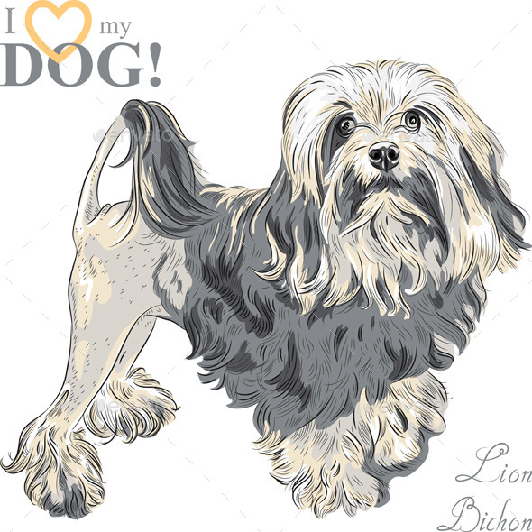 Vector Dog Breed Lowchen - Animals Characters