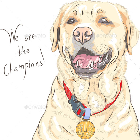 Labrador Retriever Champion - Animals Characters