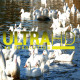 Ducks in River 3 - VideoHive Item for Sale