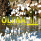 Ducks in River 4 - VideoHive Item for Sale