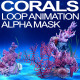 Corals - VideoHive Item for Sale