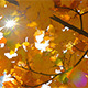 Yellow Fall Leaves and Sunny Stars - VideoHive Item for Sale