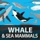 Marine Mammals - GraphicRiver Item for Sale