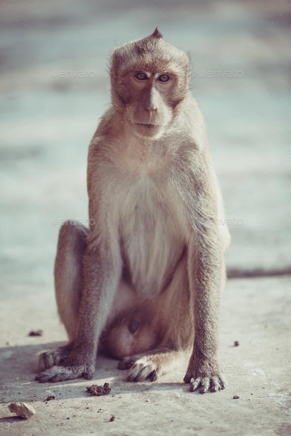 Monkey portrait - Stock Photo - Images